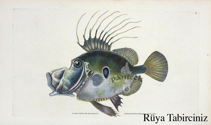 Rüyada dülger balığı görmek