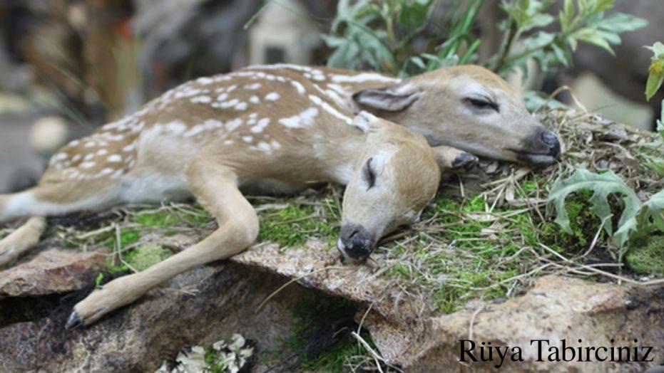 Rüyada geyik görmek