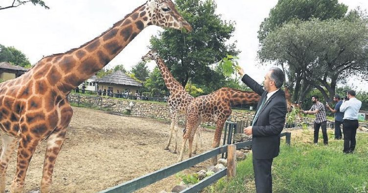 Rüyada hayvanat bahçesi