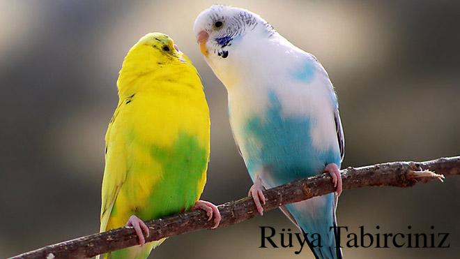Rüyada kuş ötmesi