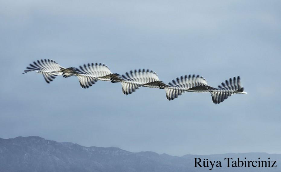 Rüyada kuş sürüsü görmek