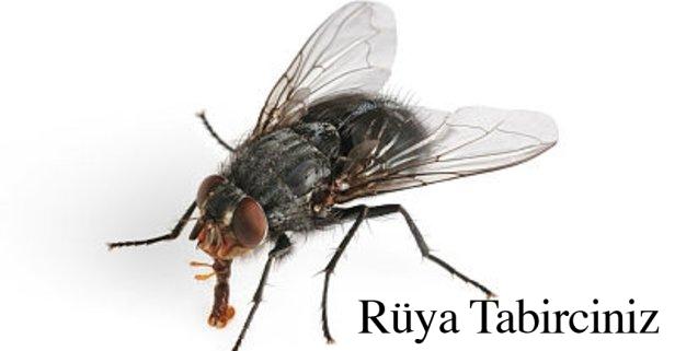 Rüyada sinek görmek