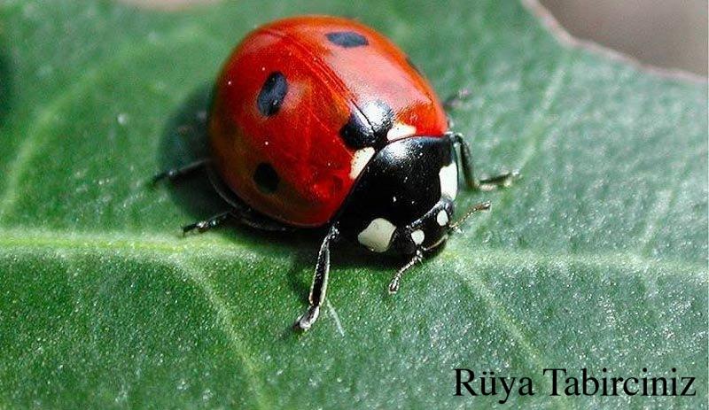 Rüyada uğur böceği