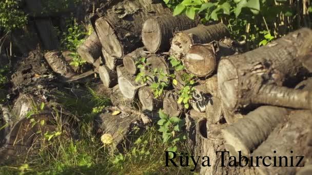 Rüyada yığılı odun görmek
